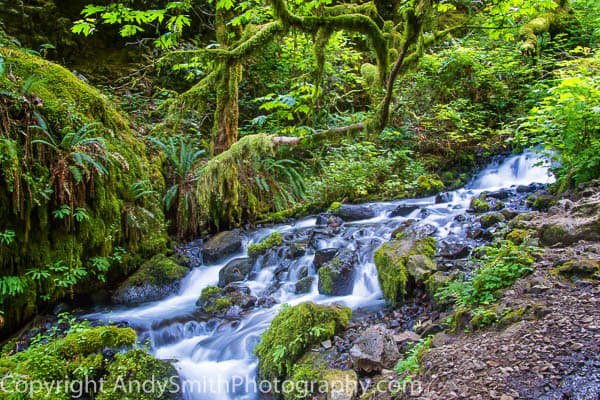 Upper Wahkeena Creek fine art photograph