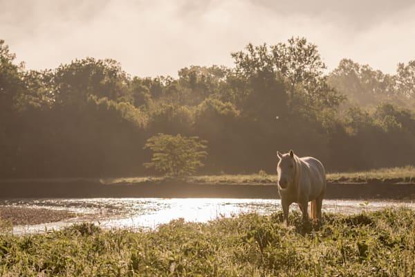 Wild Horse Misty Morning