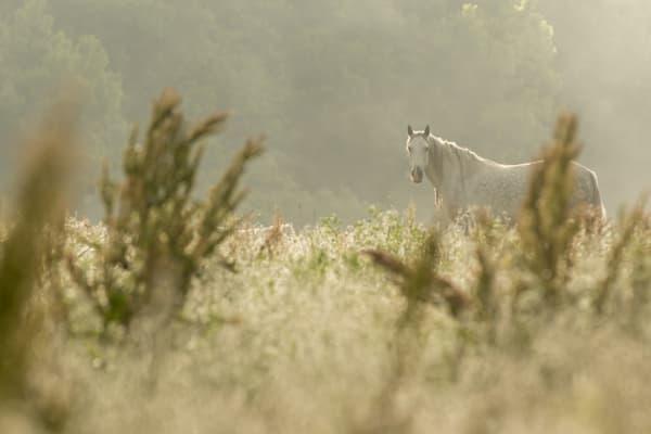 White Horse, White Field, White Mist