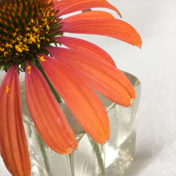 Cone Flower Art Photo