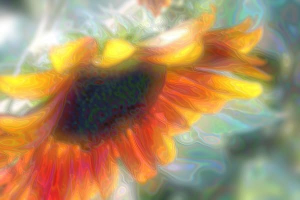 Hazy Sunflower Art Photo