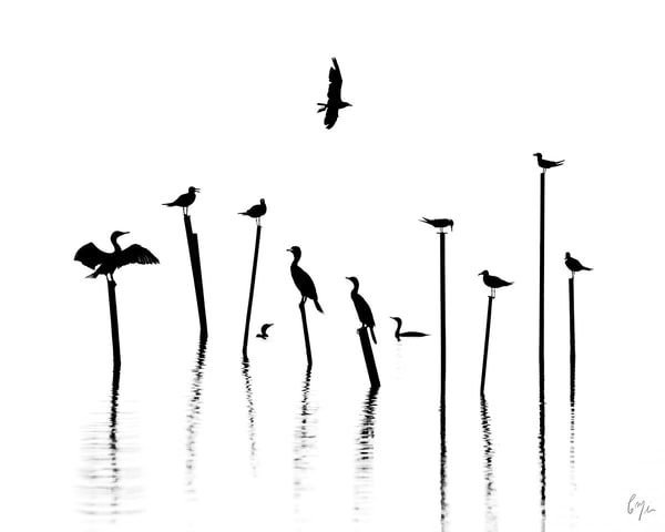 Constance Mier Photography - birds