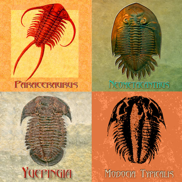 Trilobite-and-Ammonite-Digital-Art