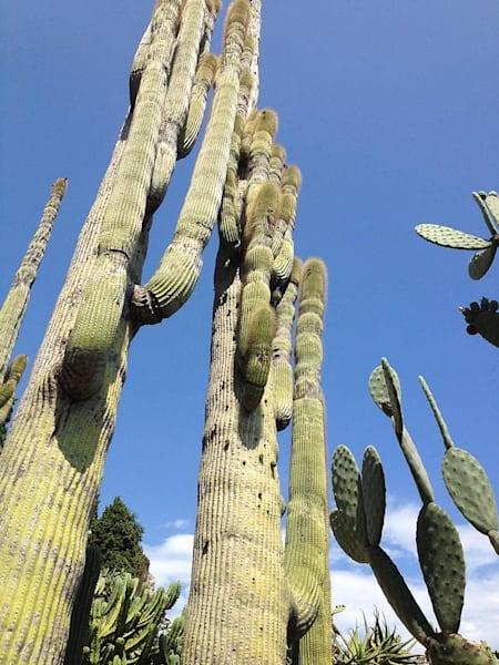 Cacti in Monaco