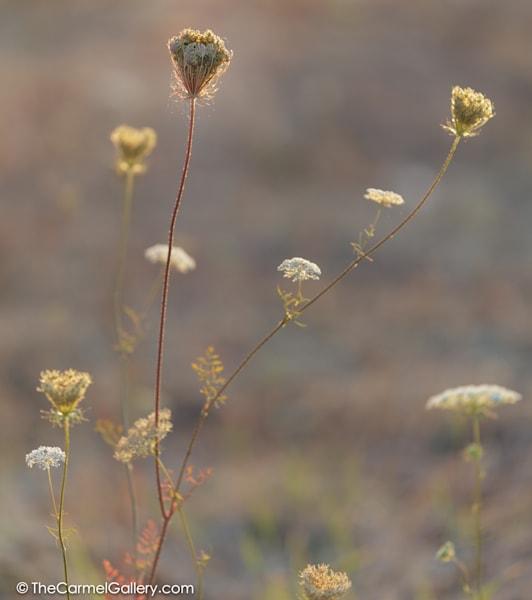 Simmer Meadow Vi Art | The Carmel Gallery