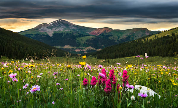 Shop for Fine Art Photographs of beautiful Colorado Wildflowers.  Mountain Wildflowers, Plains Sunflowers and Sage, Paintbrush, Columbines, Daisies, Poppy's, Blue Bells, all captured as only unique Landscape photographer Jon Blake can.