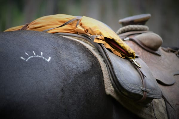 close-up photograph of a horse brand for sale as Fine Art