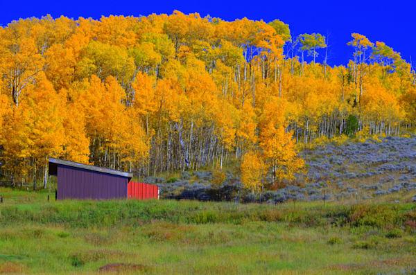 Red Barn Among the Aspens--Grand Lake, Colorado