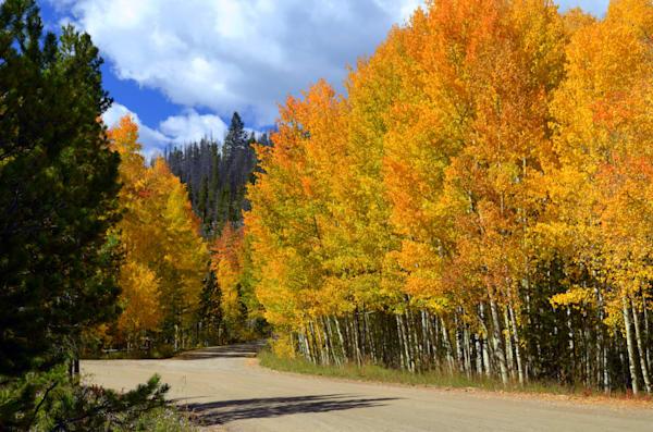 Road Into the Golden Aspens--Grand Lake, Colorado