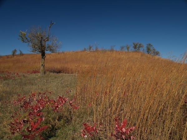 Lone tree in the Flint Hills of Eastern Kansas