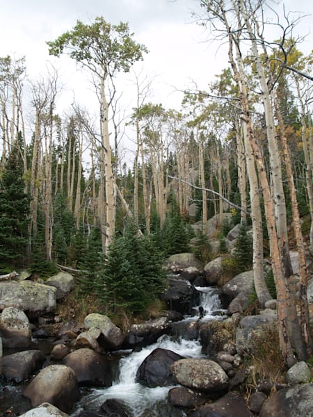 Flowing Spring Water Amongst the Trees--Rocky Mountain National Park