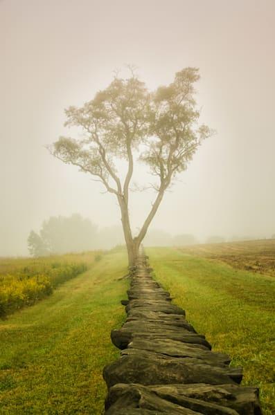Calming Morning Landscape Photo Wall Art by Landscape Photographer Melissa Fague