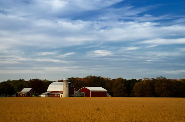 Red Barn in Golden Field Landscape Photo Wall Art by Landscape Photographer Melissa Fague