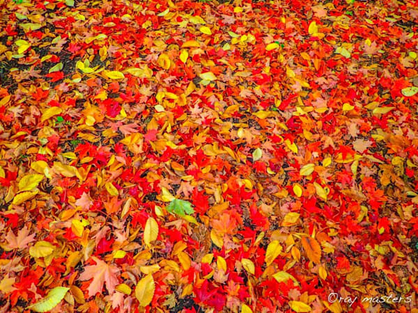 Autumn Carpet Photography Art | Ray Masters Productions