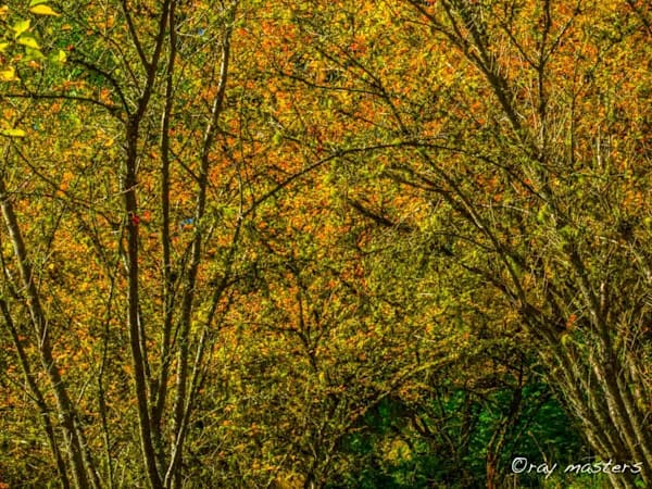 Autumn Gathering Photography Art | Ray Masters Productions