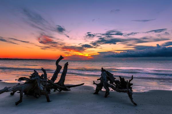 Driftwood at Sunrise