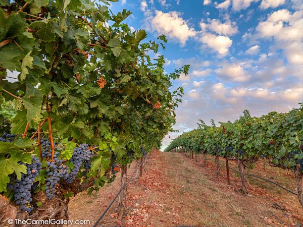 Harvest Sky Art | The Carmel Gallery