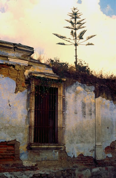 Tree Atop House in Guatemala