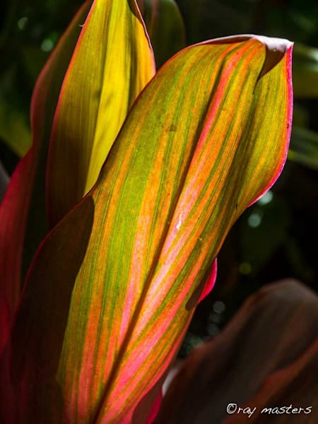 Leaf Glow