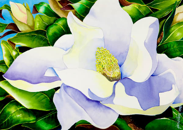 Magnolia in Leaves