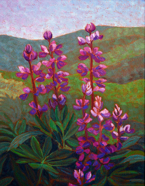 Lupins - Canadian Artist Sherry Nielsen - reproductions and originals