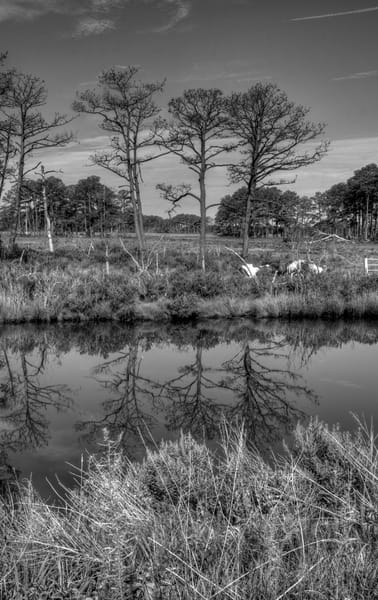 Fine Art Black And White Photograph of Assateague Reflection by Michael Pucciarelli