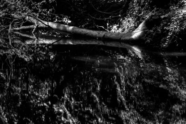 Fine Art Black And White Photograph of Rock Creek Reflection by Michael Pucciarelli