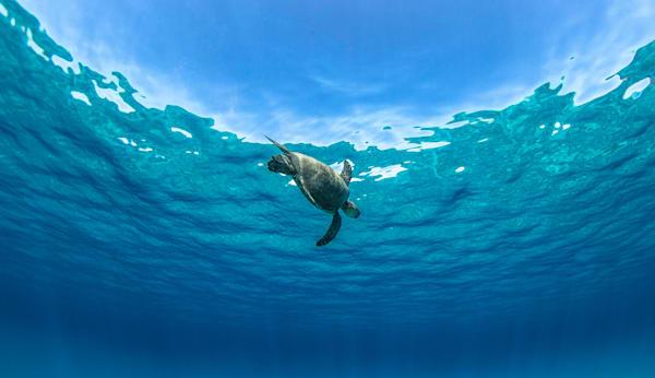 Ocean Photography  |  Honu World by Jaysen Patao