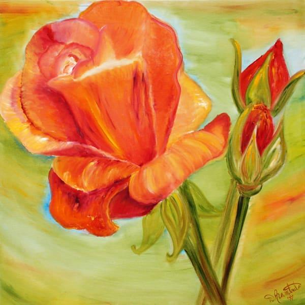 Rebirth of the Rose II