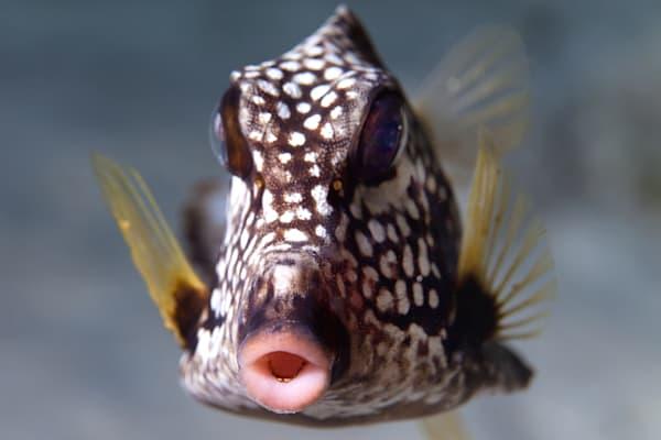 UW 295: Trunk Fish, Bonaire