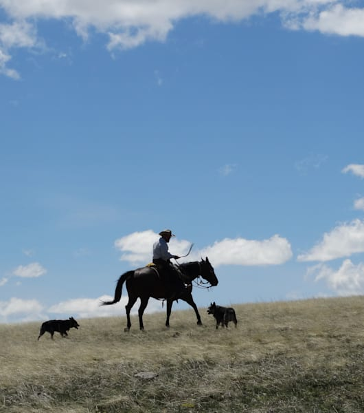 Photograph of a horseback rider with dogs for sale as Fine Art