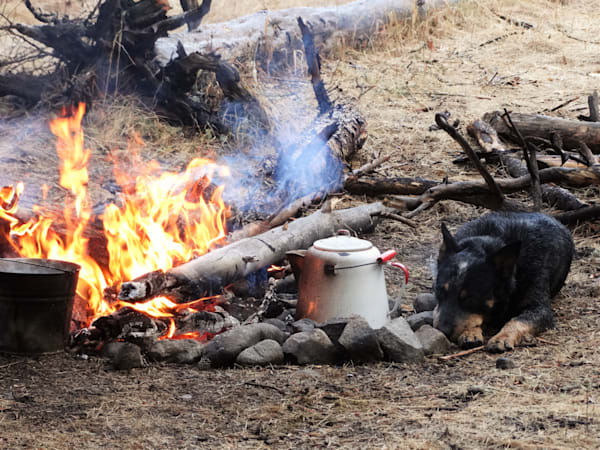 Photograph of a camp fire with pots and dog for sale as Fine Art