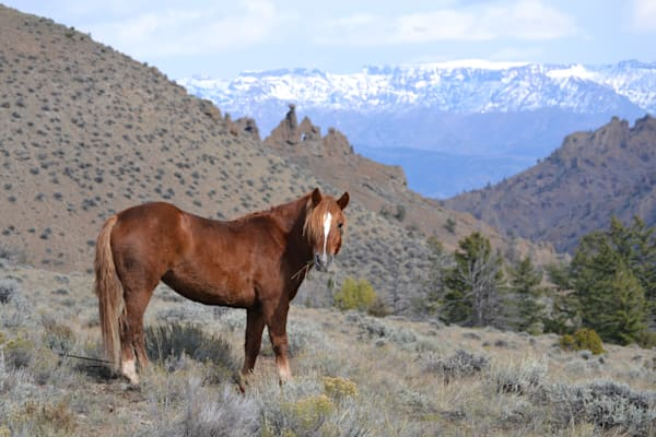 Photograph of a horse and mountains for sale as Fine Art