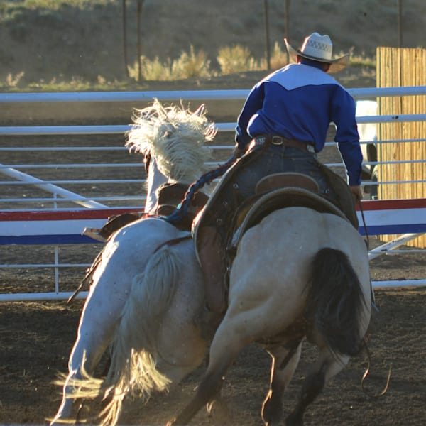 Photograph of a rodeo pickup man catching a horse for sale as Fine Art