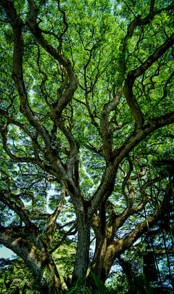 Through the branches fine art tree flora photograph