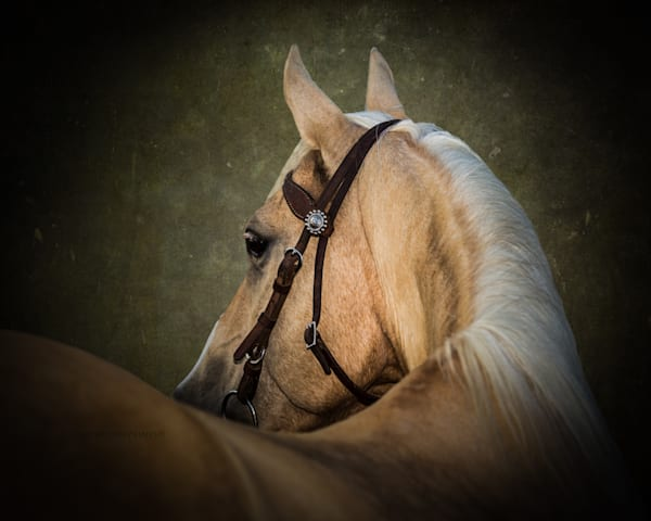 Palomino head study with textured background.