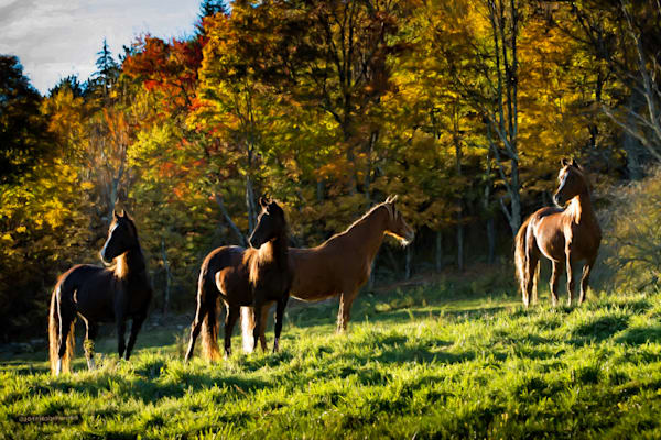 Mares   Catskills In Autumn Photography Art | HoofPrintsFineArt