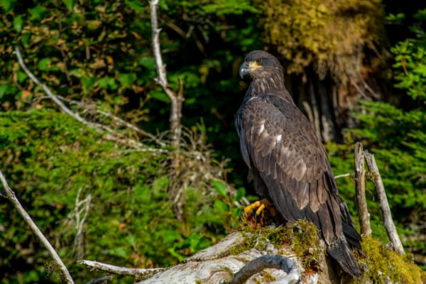 Young and Proud fine art wildlife photograph