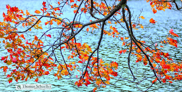New Hampshire fall foliage as eco-art therapy prints