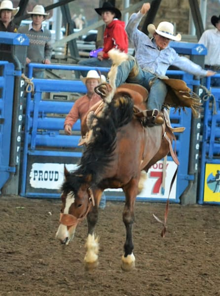 Photograph of a cowboy who is getting off the bronc for sale as Fine Art
