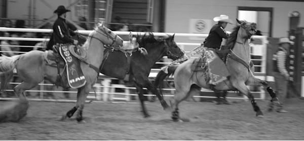 Black and White Photograph of rodeo pickup men taking a bronc to the gate for sale as Fine Art