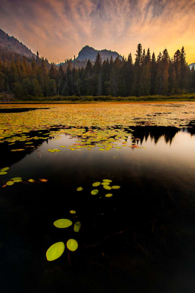 Lillies Of The Lake Art | Nelson Fine Art Printing