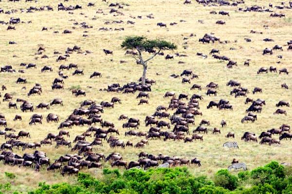 Buffalos And Wild Beasts 012 Photography Art   Cheng Yan Studio