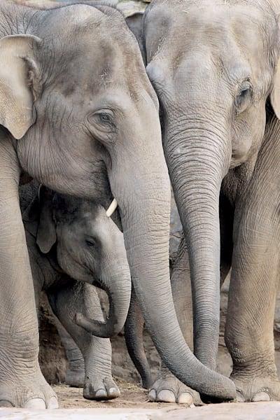 elephants-027
