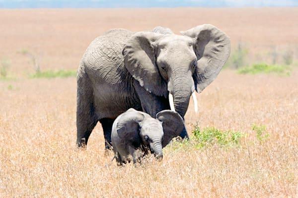 elephants-032