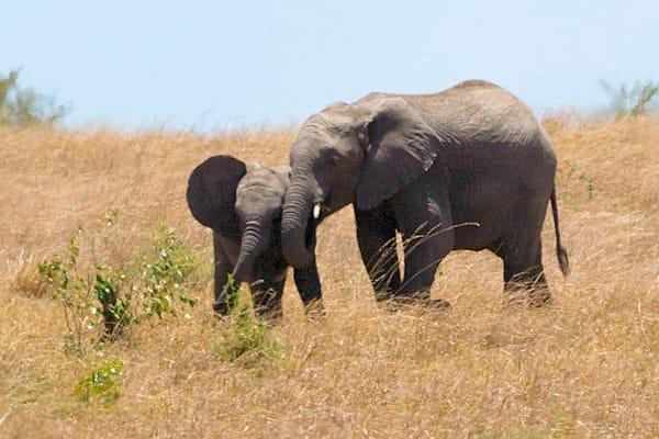 elephants-033