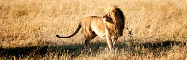 lions-016