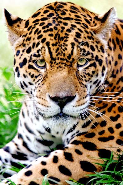 jaguars-002