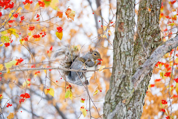 squirrels-and-chipmunks-002