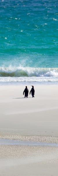 penguins-002